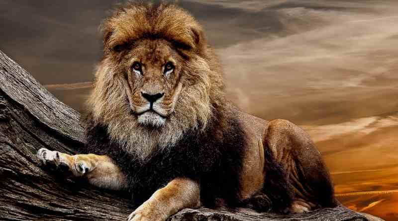 न राजा बिना सेवक, न सेवक बिना राजा - पंचतंत्र की कहानी