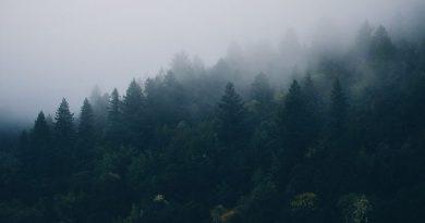 शरद वर्णन - स्व. नवल सिंह भदौरिया कृत ब्रज भाषा की कविता