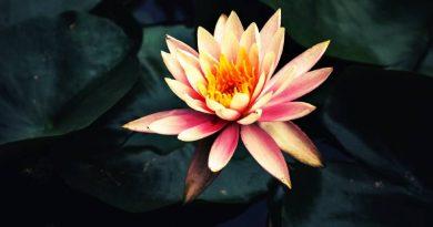 ज्ञानयोग पर द्वितीय प्रवचन: स्वामी विवेकानंद - Gyan Yoga Par Dwitiya Pravachan