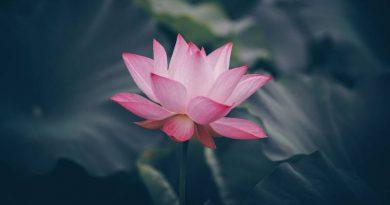 ज्ञानयोग पर नवम प्रवचन: स्वामी विवेकानंद - Gyan Yoga Par Navam Pravachan