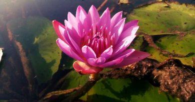 ज्ञानयोग पर सप्तम प्रवचन: स्वामी विवेकानंद - Gyan Yoga Par Saptam Pravachan