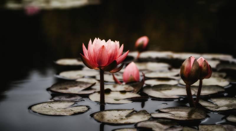 ज्ञानयोग का परिचय: स्वामी विवेकानंद - Gyan Yoga Ka Parichay: Vivekananda
